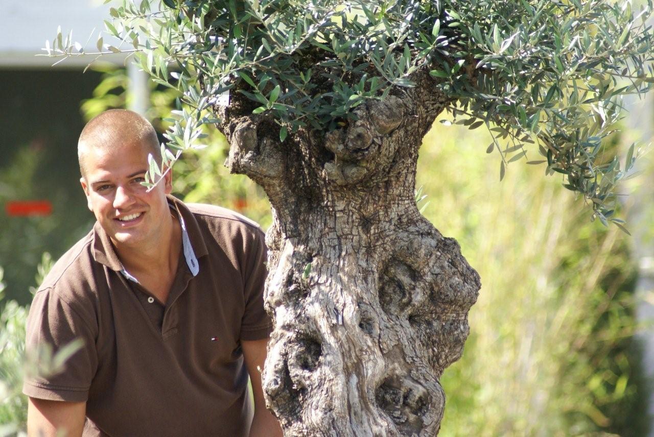 winterharde Olijfbomen, Palmbomen en Vijgenbomen voor de beste prijs   MEDITERRANOVA